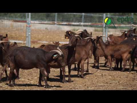 EPDRA  - Vídeo de apresentação