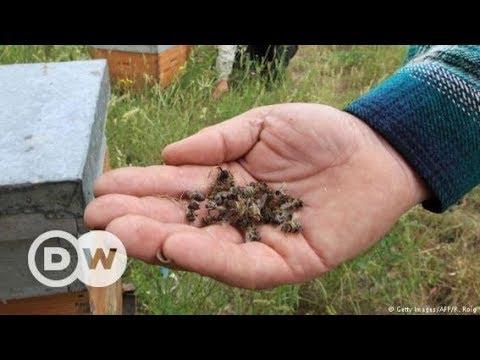 Romania: Fipronil - the hidden threat   DW Documentary