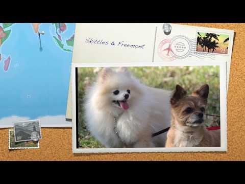 Aldens Kennels Pet Resort Illinois