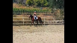 GOLDY'S GORGEOUS SMOOTH TROT, LOOSE REIN, LARGE OPEN ARENA