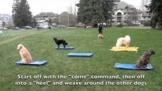 Truman, Soft-coated Wheaten Terrier