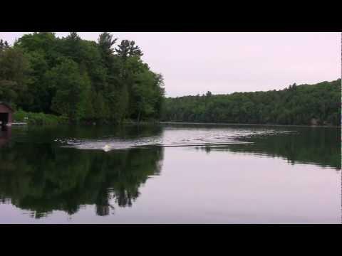 Meech Lake Swim