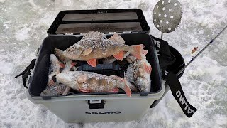Ловля Окуня на Яйца зимой 2021 Уловистая приманка на окуня Зимняя рыбалка на окуня Окунь на яйца