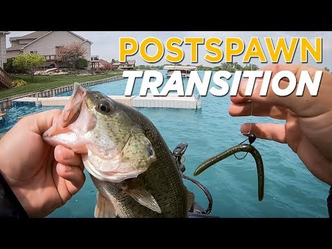 POSTSPAWN BASS Transition: How to Catch Bass Throughout the Spawn Phases