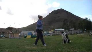 Using A Whistle For An Emergency Recall - Clicker Dog Training Tutorial