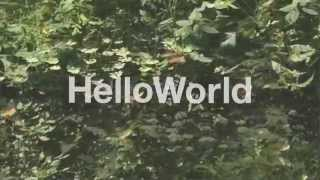 Hello World - Honey Bee