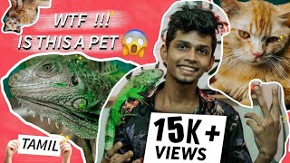 My Pets 💘 - Iguana and Persian cat !!! |DRIPDIFFERENT|