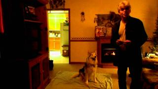 Dog Trained In Sign Language...