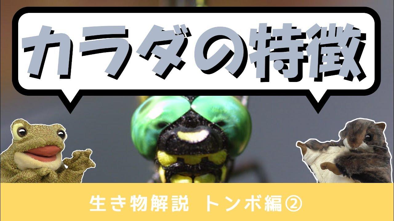 トンボ編②【生き物解説】飛ぶ技術は昆虫界ナンバーワン・トンボの体の秘密にせまる