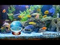 Flat Earth Video 11 Floating In A Fishtank mp3