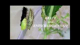 Von der Raupe zum Schmetterling - Metamorphose