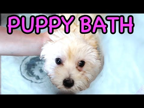 PUPPY'S FIRST BATH!! WITH CARTER SHARER & LIZZY SHARER 🐶💦 (10 Week Old Puppy)
