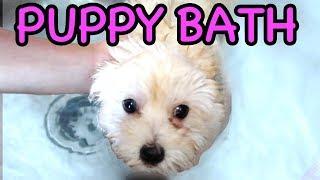 puppys first bath with carter sharer lizzy sharer 🐶💦 10 week old puppy