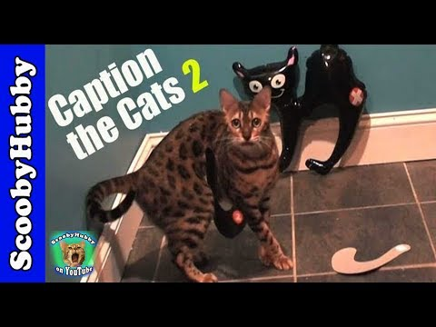 caption-the-cats-#2