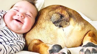Happy Babies And Dogs Are Playing Together - Kids Playing With Pets