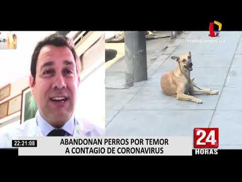 Abandonan Perros Por Temor A Contagio De Coronavirus