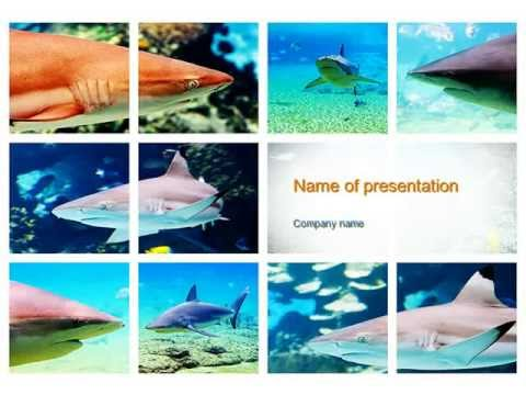 Sharks Powerpoint Template Youtube