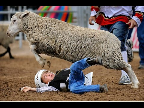 Angry Sheep Attacks