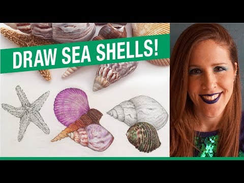 How To Draw Sea Shells! How To Draw A Starfish!
