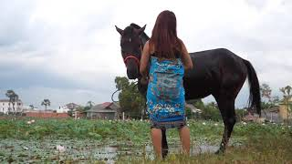 🐎Village Student Girl Clean black horse and training horse Basics   horse training for beginners🐎