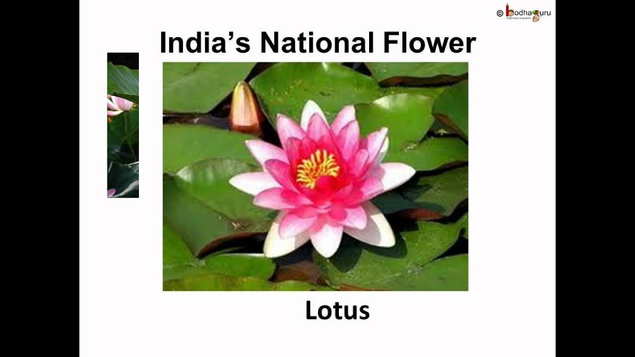 Science Plant Habitat And Adaptation Telugu Youtube