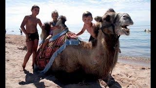 Катаемся на верблюде. Чок-Тал Иссык-Куль Пансионат Лазурный берег. Отдых на Иссык-Куле 2017