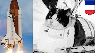 World's first astro cat will finally be honoured with a statue - TomoNews