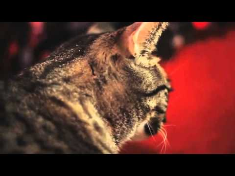 Collective Soul Cat [10 minutes]