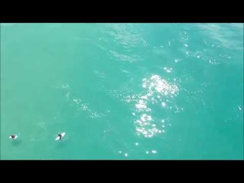 Thumnbail for Footage from the first shark surveillance drone