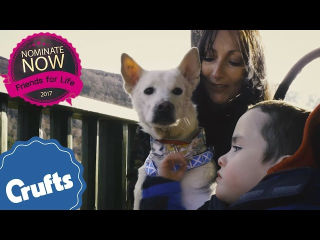 A Life Of Friendship | Eukanuba Friends For Life 2017