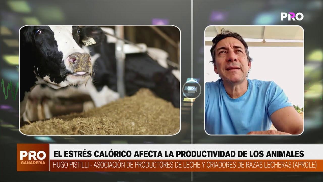 ESTRÉS CALÓRICO AFECTA PRODUCTIVIDAD DE ANIMALES