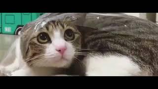 Cutest Cats Compilation 2018 | Best Cute Cat Videos