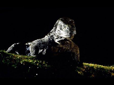 Komodo (Trailer español)