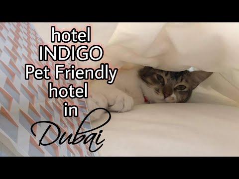 PET FRIENDLY HOTEL | HOTEL INDIGO DUBAI DOWNTOWN 2021 Vlog#222