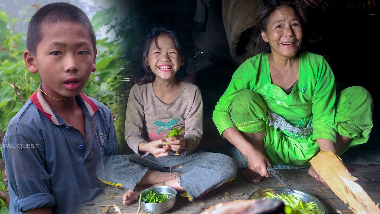 Download Family in the jungle || Season - 2 || Video - 30 || Family in the cowshed ||