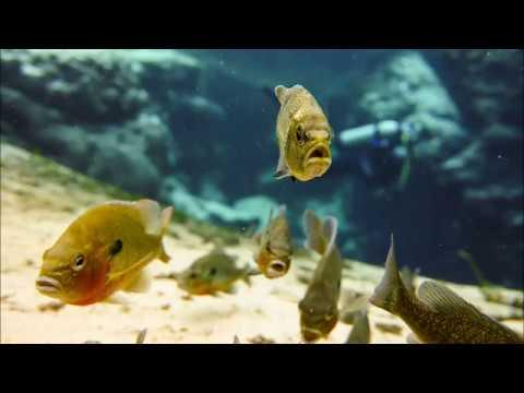 Sea Life Camera DC2000 Promo 01/24/2017
