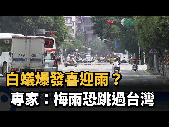 白蟻爆發喜迎雨?  專家:梅雨恐跳過台灣-民視台語新聞