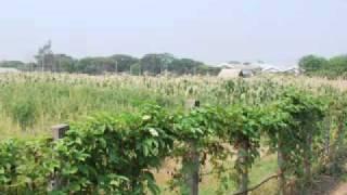 Fields of Study: Watermelon Breeding