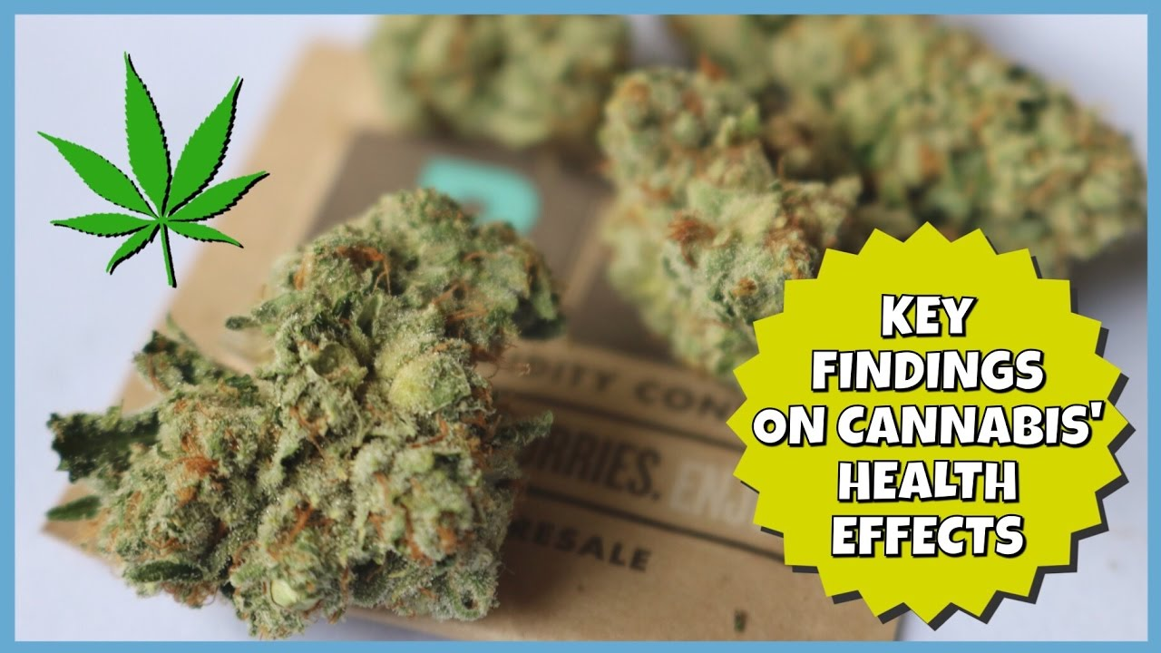 KEY FINDINGS ON CANNABIS' HEALTH EFFECTS | NewsNug recap | CoralReefer