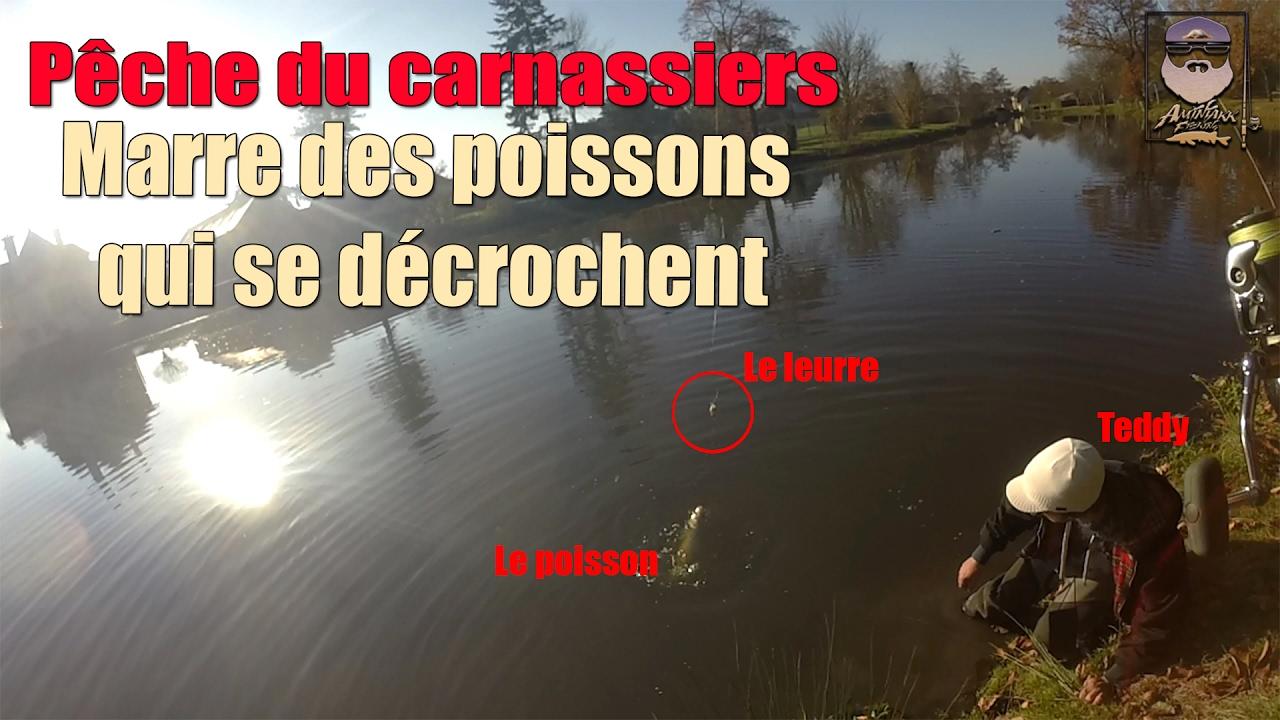 P che du carnassiers marre des poissons qui se for Marre a poisson
