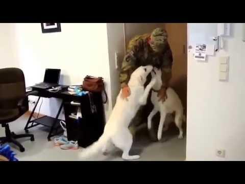 Собаки встречают владельцев после долгой разлуки