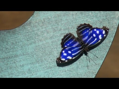 Butterfly Wonderland: A Calming Walk In The Order Of Lepidoptera