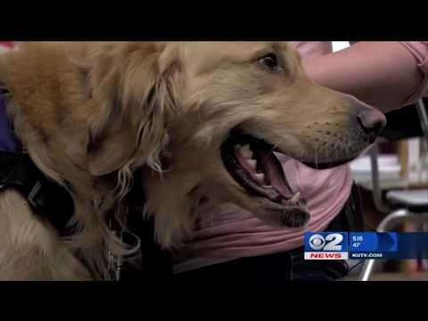 Inside the Story: Furry guardian angel alerts teacher of student's seizures