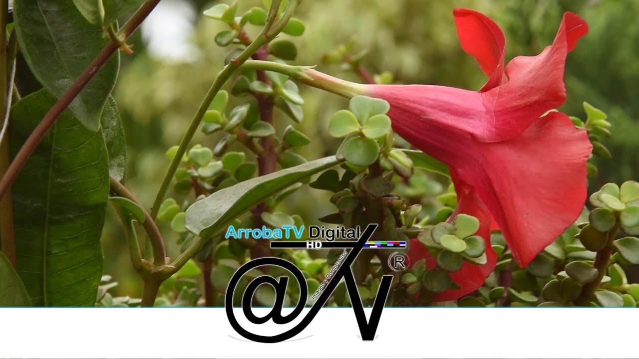 Flormacoop plantas ornamentales en bogot colombia for Jardin unal 2016