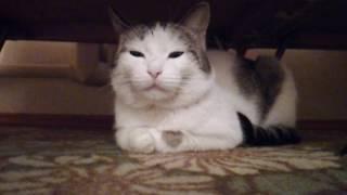 Светящиеся глаза у кота Тишки