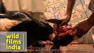 Bloody slaughter of goats on Eid in India