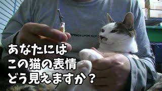爪切りが好きなのか嫌いなのか良く分からない猫