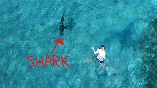 Never Swim Near Sharks Feeding at the Beach