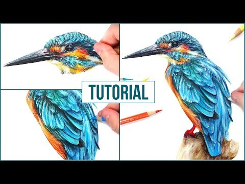 how-to-draw-a-realistic-bird-using-coloured-pencils-|-step-by-step-drawing-tutorial