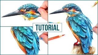 How to Draw a Realistic Bird using Coloured Pencils | Step by Step Drawing Tutorial